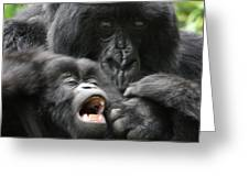 Mountain Gorilla Adf2 Greeting Card