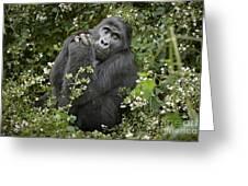 Mountain Gorilla Praying Greeting Card