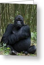 Mountain Gorilla Silverback Greeting Card