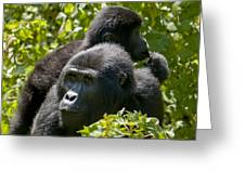 Mountain Gorilla With Infant  Greeting Card