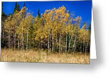 Mountain Grasses Autumn Aspens In Deep Blue Sky Greeting Card