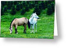 Mountain Horses Grazing  Greeting Card