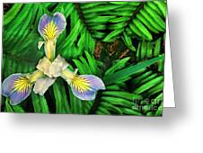 Mountain Iris And Ferns Greeting Card