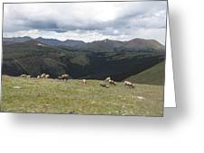 Mountain Landscape With Bighorn Sheep Greeting Card