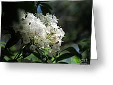 Mountain Laurel II Greeting Card