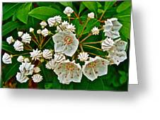 Mountain Laurel-maine Greeting Card