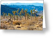 Mountain Layer Landscape From Quail Springs In Joshua Tree Np-ca- Greeting Card
