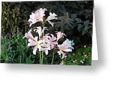 Mountain Lillies Greeting Card
