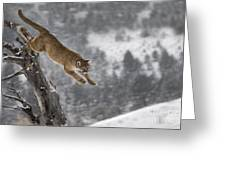 Mountain Lion - Silent Escape Greeting Card by Wildlife Fine Art