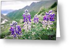 Mountain Lupine Greeting Card