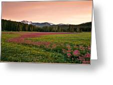 Mountain Meadow Color Greeting Card