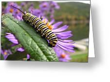 Mountain Monarch 2 Greeting Card