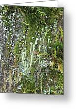 Mountain Moss Lichens And Fungi Greeting Card