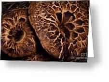 Mountain Mushrooms   #3670 Greeting Card