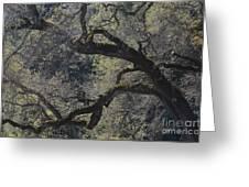 Mountain Oak Greeting Card