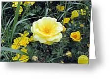 Mountain Rose Greeting Card