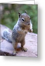 Mountain Squirrel 2 Greeting Card