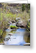 Mountain Stream In Castlewood Canyon State Park Greeting Card