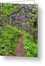 Mountain Trail With Catawba Rhododendron Greeting Card