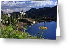 Mountain Wildflowers Greeting Card
