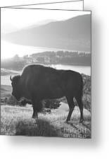 Mountain Wildlife Greeting Card