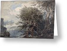 Mountainous Landscape With Beech Trees Greeting Card