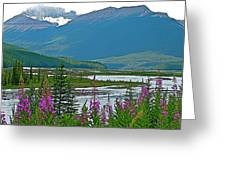 Mountains And Fireweed Along North Sascatchewan River Along Icefield Parkway-ab Greeting Card