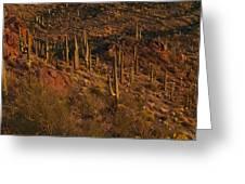 Mountainside Of Cacti Greeting Card
