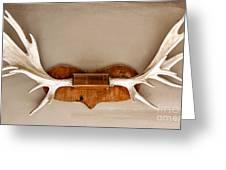Mounted Elk Antlers Greeting Card