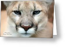 Mountian Lion Greeting Card
