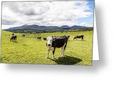 Mourne Cows Greeting Card