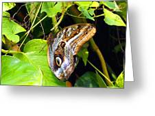Mournful Owl Butterfly Wings Greeting Card