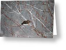 Mourning Dove Asleep In Snowfall Greeting Card