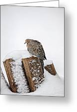 Mourning Dove In Snow Greeting Card