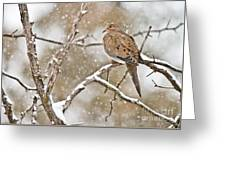 Mourning Dove Pictures 68 Greeting Card