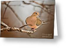 Mourning Dove Pictures 71 Greeting Card