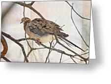 Mourning Dove - Sing No Sad Song For Me #2 Greeting Card