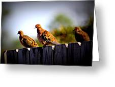 Mourning Doves On Fence Greeting Card