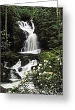 Mouse Creek Falls - Fs000675 Greeting Card