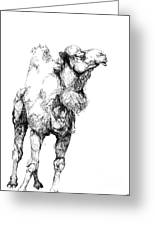 Mr Camel To You Greeting Card