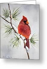 Mr Cardinal Greeting Card by Bobbi Price