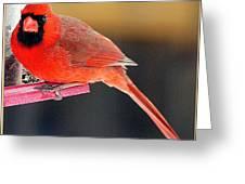Mr. Cardinal Greeting Card