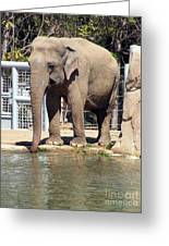 Mr. Elephant Sipping Water Greeting Card