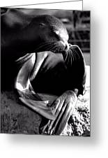 Mr. Flipper Whisker Itch Greeting Card by John Grace