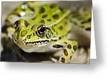 Mr. Froggy Greeting Card