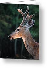 Mr. Majestic Greeting Card
