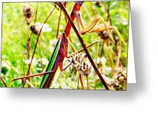Mr Mantis Greeting Card
