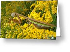 Mr. Mantis Greeting Card