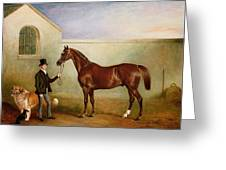 Mr Meakin Holding Sir Robert Peels Chestnut Hunter With His Dogs Hector And Jem Greeting Card