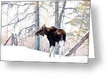 Mr. Moose Greeting Card